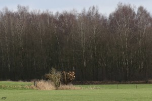 BIOMASSALLAND-Landschapsonderhoud