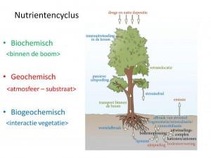 Nutrienten worden continue hergebruikt en in een cyclus gehouden. In bossen en landschapselementen blijven nutrienten opgeslagen in hout en bodem. Het is echter niet zo dat daarmee de nutrienten ook in het systeem blijven. Er vindt altijd uitspoeling plaats, en met de oogst worden nutrienten afgevoerd. (Den Ouden (2015), presentatie Bodemvruchtbaarheid, WUR)